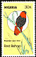 Northern Red Bishop Euplectes franciscanus  1984 Rare birds