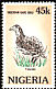 Double-spurred Francolin Pternistis bicalcaratus  1984 Rare birds