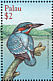 Common Kingfisher Alcedo atthis  2001 Birds of Palau