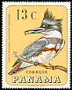 Belted Kingfisher Megaceryle alcyon  1967 Birds