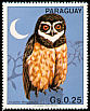 Spectacled Owl Pulsatrix perspicillata  1983 South American birds