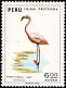 Chilean Flamingo Phoenicopterus chilensis  1973 Fauna protection