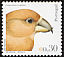 Red Crossbill Loxia curvirostra  2004 Birds of Portugal