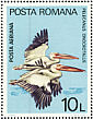 Great White Pelican Pelecanus onocrotalus  1980 European nature protection