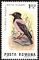 Rosy Starling Pastor roseus  1983 Birds of the Danube Delta