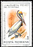 Brown Pelican Pelecanus occidentalis  1985 Audubon