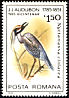 Yellow-crowned Night Heron Nyctanassa violacea  1985 Audubon