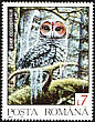 Spotted Owl Strix occidentalis  1992 Wild animals 7v set