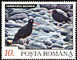 Black Oystercatcher Haematopus bachmani  1992 Wild animals 7v set