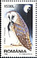 Western Barn Owl Tyto alba  1998 Night birds