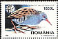 Water Rail Rallus aquaticus  1998 Night birds
