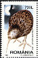 Southern Brown Kiwi Apteryx australis  1998 Night birds Booklet