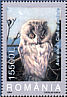 Long-eared Owl Asio otus  2003 Owls