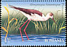 Black-winged Stilt Himantopus himantopus  2009 Birds of the Danube Delta