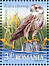 Saker Falcon Falco cherrug  2009 Birds of the Danube Delta Sheet