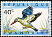Woodland Kingfisher Halcyon senegalensis  1967 Birds of Rwanda