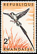 Pin-tailed Whydah Vidua macroura  1967 Birds of Rwanda
