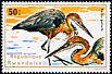 Goliath Heron Ardea goliath  1975 Aquatic birds