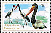 Saddle-billed Stork Ephippiorhynchus senegalensis  1975 Aquatic birds