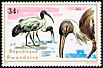 Straw-necked Ibis Threskiornis spinicollis  1975 Aquatic birds