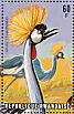 Grey Crowned Crane Balearica regulorum
