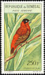 Northern Red Bishop Euplectes franciscanus