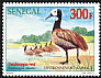White-faced Whistling Duck Dendrocygna viduata