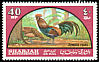 Red Junglefowl Gallus gallus  1965 Birds
