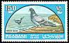 Rock Dove Columba livia  1965 Birds