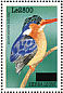 Malachite Kingfisher  Corythornis cristatus