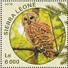 Barred Owl Strix varia