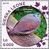 Sulawesi Ground Dove Gallicolumba tristigmata