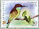 Blue-throated Bee-eater  Merops viridis