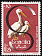 Pink-backed Pelican Pelecanus rufescens