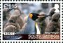 King Penguin Aptenodytes patagonicus  2011 Frozen planet Sheet with 4x1.15�