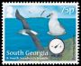 Grey-headed Albatross Thalassarche chrysostoma