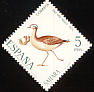 Cream-colored Courser Cursorius cursor  1971 Stamp day