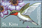 Ruby-throated Hummingbird Archilochus colubris  2001 Flora and fauna of the Caribbean