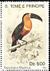 Channel-billed Toucan Ramphastos vitellinus