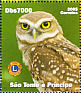 Little Owl Athene noctua  2006 Animals 9v sheet