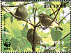 Principe White-eye Zosterops ficedulinus  2008 WWF Sheet
