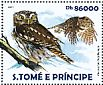 Ferruginous Pygmy Owl Glaucidium brasilianum  2015 Rainforest owls