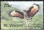 Common Black Hawk Buteogallus anthracinus  1989 Birds of St Vincent