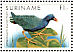 Purple Gallinule Porphyrio martinica  1985 Birds