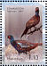 Common Pheasant Phasianus colchicus  2007 Birds Sheet, stamps with coloured frames