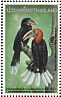 Rufous-necked Hornbill Aceros nipalensis