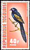 Yellow-mantled Widowbird Euplectes macroura