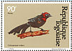 Red-collared Widowbird Euplectes ardens