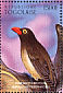 Red-billed Oxpecker Buphagus erythrorynchus  1996 Endangered species
