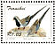 Namaqua Dove Oena capensis  1993 Doves Sheet